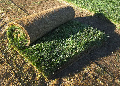 Where to buy Sod, Where to Buy Sod?
