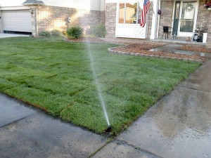 lawn fertilizer, Lawn care tips