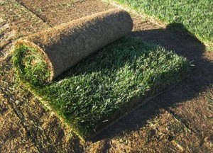 Where to buy Sod, Sod Prices